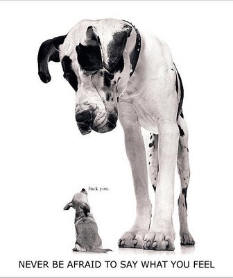 Cães maiores são mais inteligentes
